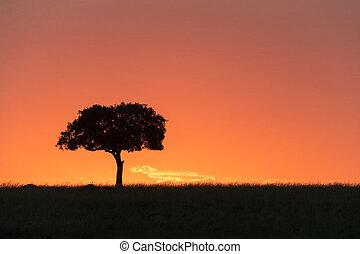 Silhouette Single Tree at Sunset in Kenya Africa