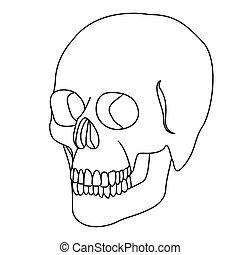 silhouette skeleton of the human skull icon