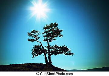 silhouette, sole, albero, lago, contro, baikal