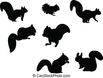 silhouette, squirrel
