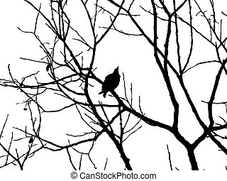 silhouette starling on tree