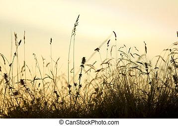 silhouette, stengels
