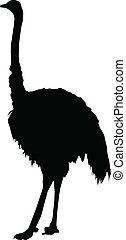 silhouette, struisvogel