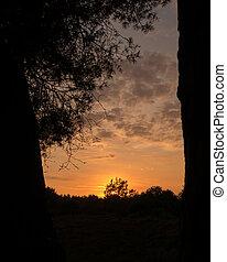 Silhouette sunset through trees