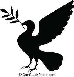 silhouette, taube, zweig