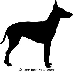 silhouette, terrier, manchester, noir