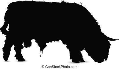 silhouette, toro