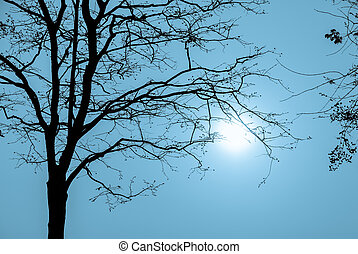Silhouette tree branch in blue background