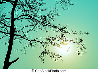Silhouette tree branch in green background