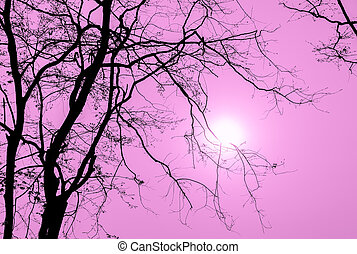 Silhouette tree branch in pink background