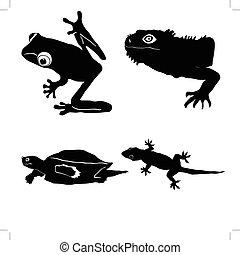 silhouette  - tree frog,iguana,loggerhead turtle,gecko