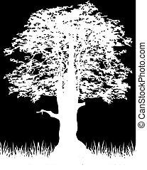 Silhouette tree on black