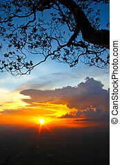 Silhouette tree on the beautiful sunset