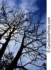 Silhouette tree