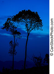 Silhouette tree sunset or sunrise on mountain with blue sky background
