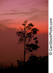 Silhouette tree sunset or sunrise on mountain with orange red sky background