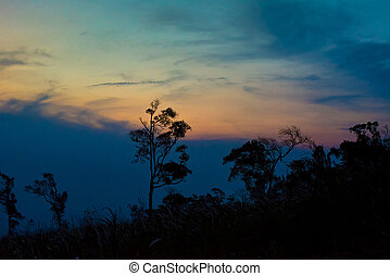 Silhouette tree sunset or sunrise on mountain with yellow blue sky background