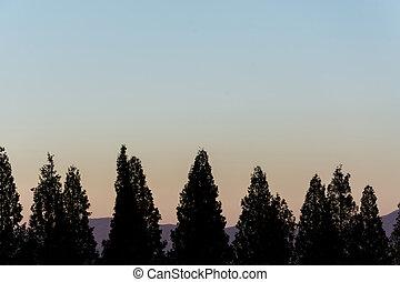 silhouette tree with beautiful sky