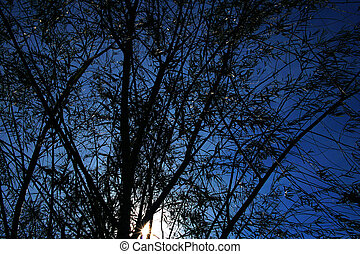 silhouette tree with blue sky