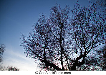 Silhouette tree with evening sky