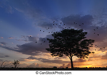 Silhouette tree with flying birds