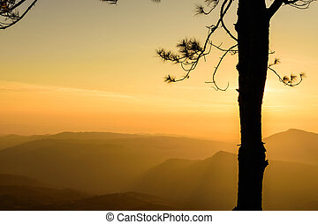 Silhouette Tree with Sunrise Background