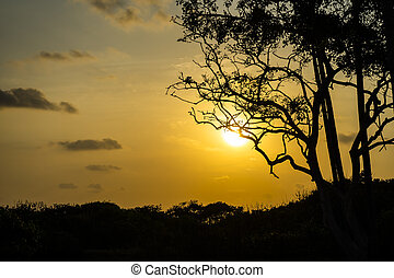 Silhouette tree with sunset sky background.