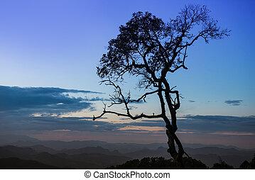 silhouette tree with twilight sky