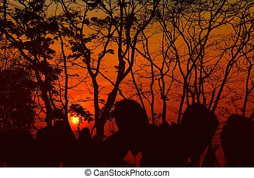 Silhouette trees of sunset in the jungle