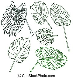 Silhouette tropical monstera leaves.