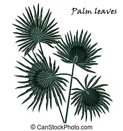 Silhouette tropical palm leaves black isolated on white background.