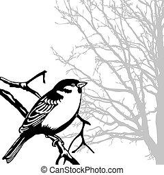 silhouette, uccello, ramo