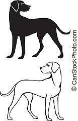 silhouette, und, kontur, hund