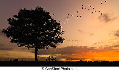 silhouette, vélo, arbre
