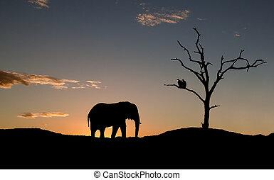 silhouette, van, elefant, en, vultures, op, ondergaande zon , in, afrika