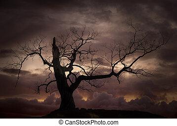 silhouette, van, naakte boom, tegen, ondergaande zon