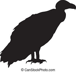silhouette, vautour