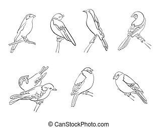 silhouette, vettore, set, uccelli