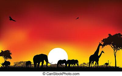 silhouette, vie sauvage, animaux