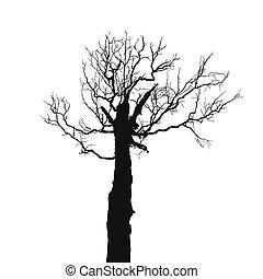 Sec arbre vecteur vieux ch ne mort sans nu - Dessin arbre nu ...
