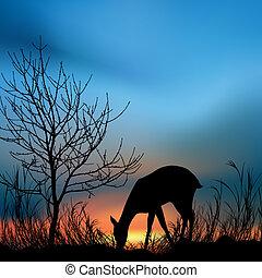 silhouette, vista, di, uno, cervo, mangiare, erba