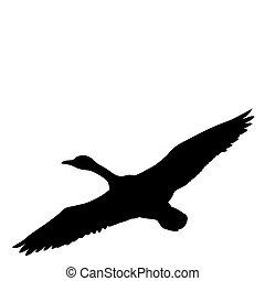 silhouette, vliegen, eenden, vector, achtergrond, witte