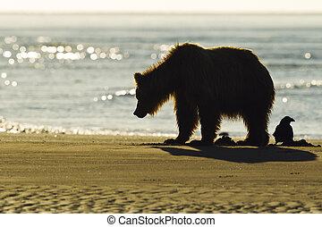 silhouette, vogel, beer