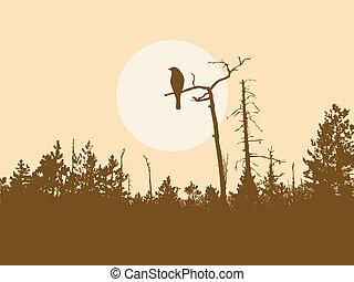 silhouette, vogel, op, boompje