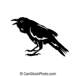 silhouette, vogel, rabe