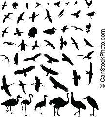 silhouette, vogels, verzameling