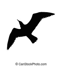 silhouette, voler, isolé, illustration, oiseau, arrière-plan., vecteur, noir, blanc, mouette