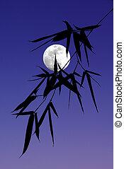 silhouette, von, bambusblätter