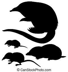 silhouette, von, der, maulwurf, maus, und, desmans, weiß,...