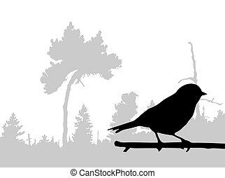silhouette, von, der, vogel, auf, zweig